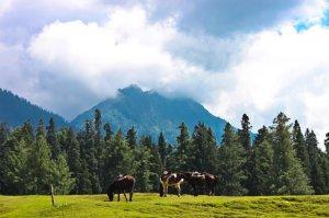 Pahalgam Tourism Tour Packages