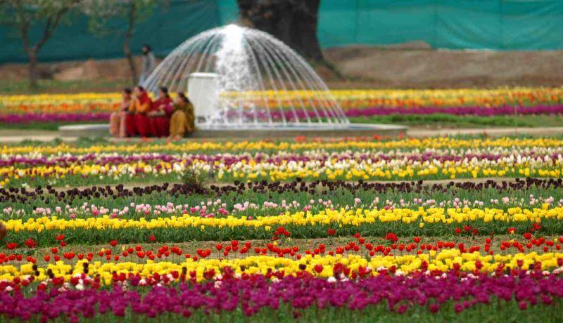 Indra Gandhi Memorial Tulip garden Siraj Bagh Srinagar Kashmir