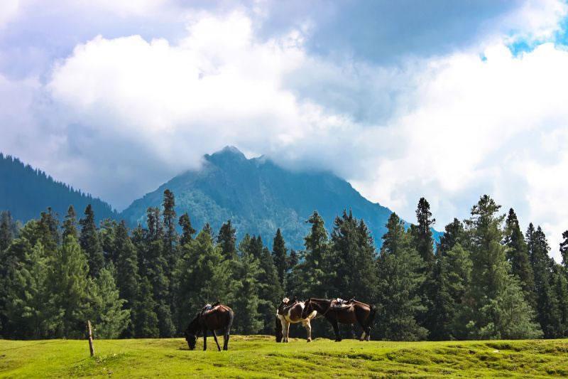 Pahalgam Tourism Pahalgam Tour  Packages